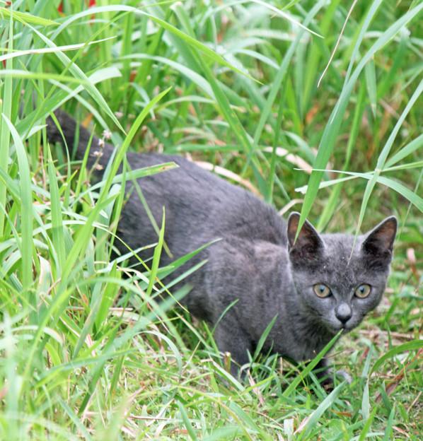 灰色の子猫ちゃん