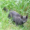 写真: 灰色の子猫ちゃん