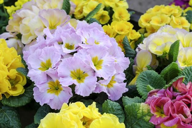 春の色色色