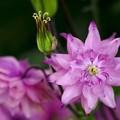 写真: フレーミング/ピンクのミルフィーユ