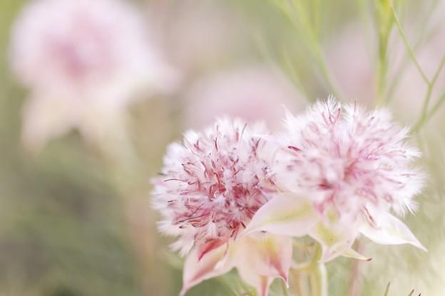 ピンキーな花たち b