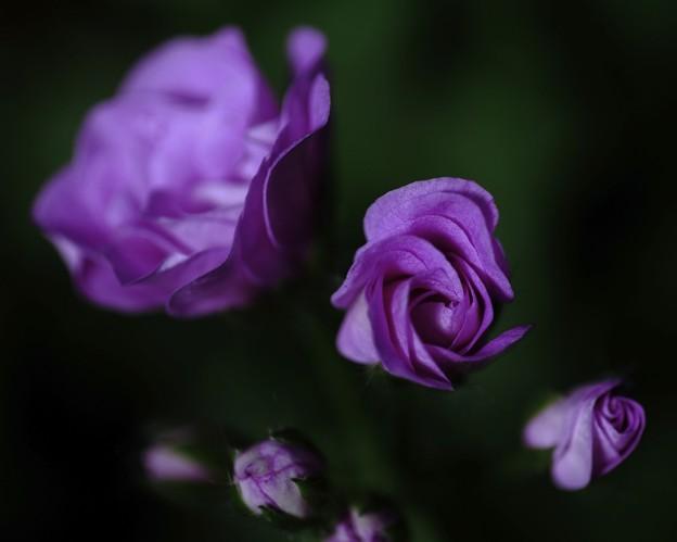 ピンキーな花たち d