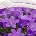 写真: shine-purple