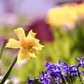 春なのに・・・春なので・・・ green 2