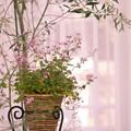 写真: 「5月、ピンクの光の中で」
