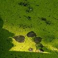 SILHOUETTE/種の池