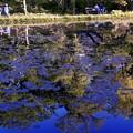 写真: SILHOUETTE/青い大野池