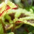 写真: ぐりん・ぐり~~~ん/光る葉っぱ