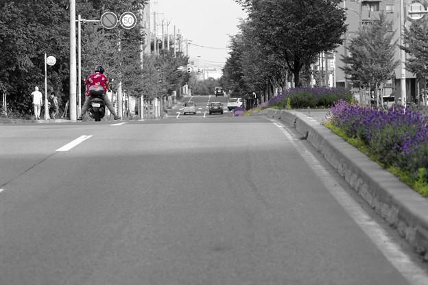 写真: ラベンダー通 R1