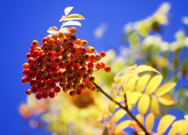 写真: 秋めく空と・・・