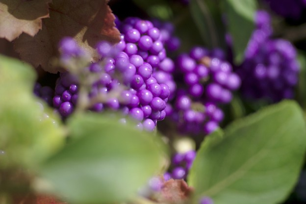 あふれる 紫