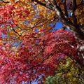 Photos: 樹芸の森で a