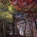 Photos: 樹芸の森で b