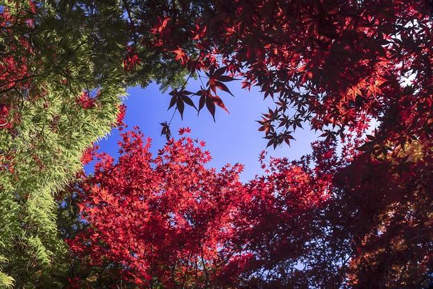 樹芸の森で c