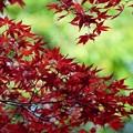 Photos: 樹芸の森で e