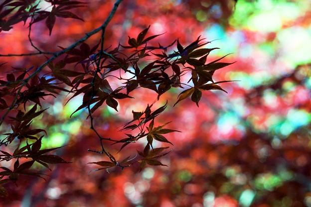 紅葉/彩光