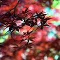 写真: 紅葉/彩光