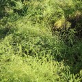 Photos: 「雉の隠れ家」