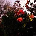 写真: 晩秋の夕
