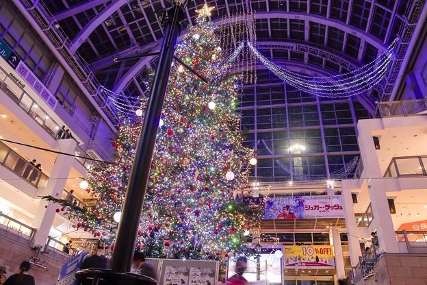 Christmas tree in the atrium 4