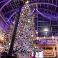 写真: Christmas tree in the atrium 4