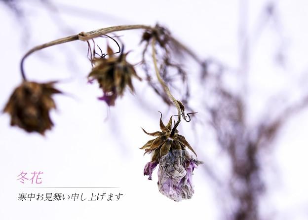 Photos: 寒中見舞い