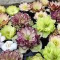 季節の花 pattern 3