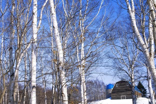 写真: 春の気配/陽射し
