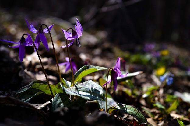 里山の遅い春 again ***
