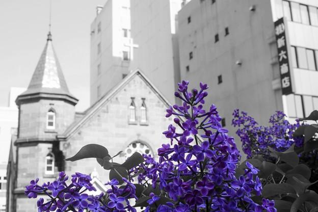 ライラックの咲く街