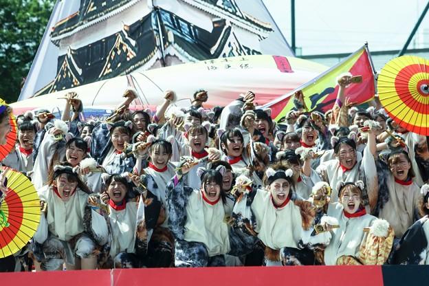 Photos: YOSAKOIソーラン祭り2019/ねこ登場