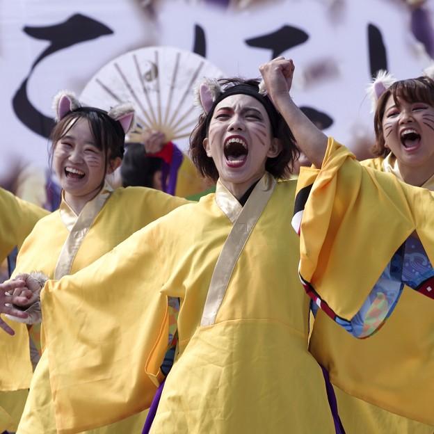 Photos: YOSAKOIソーラン祭り2019/ねこシャウト