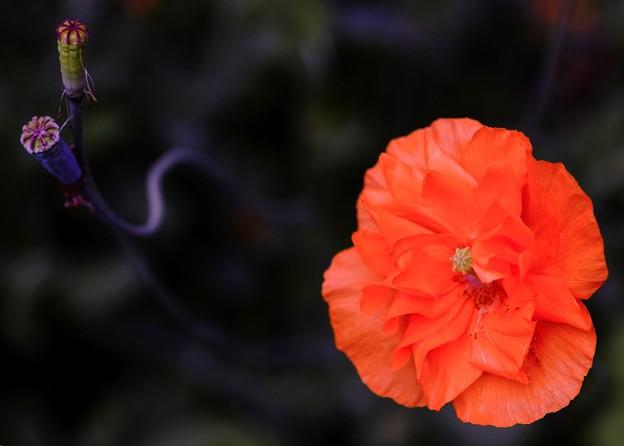 オレンジ色の誘い