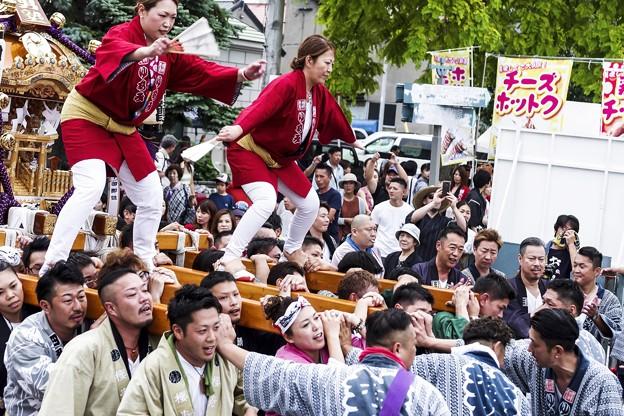 祭りの日/小樽寸景/神輿