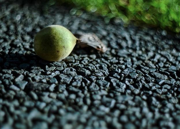 過日の果実/地上のクルミ