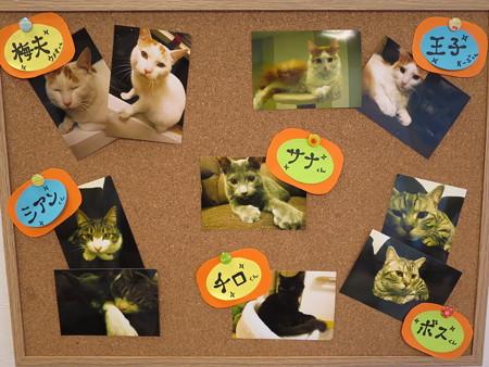 ねこカフェ 猫とお茶 キャスト一覧