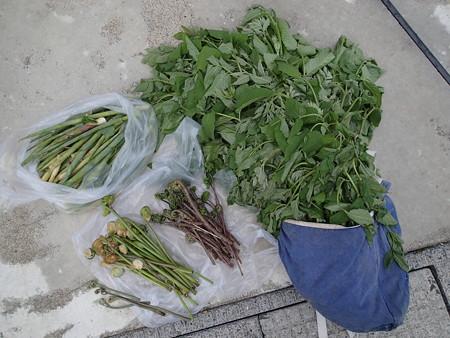2016/04/30の収穫