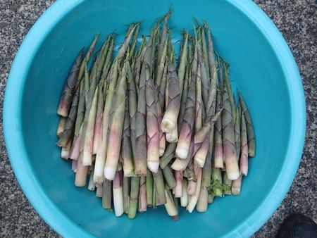 2016/05/13の収穫
