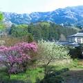 Photos: 霞の山桜山