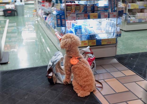 主人を待つ犬