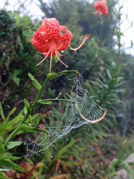 霧の日の蜘蛛の巣