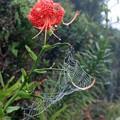 写真: 霧の日の蜘蛛の巣