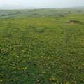 草黄葉の始まり