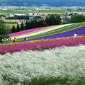 Photos: 富良野の光景