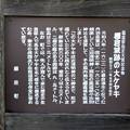 Photos: けやき説明