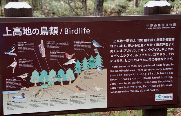 上高地の鳥類