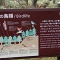 写真: 上高地の鳥類