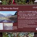写真: 大正池