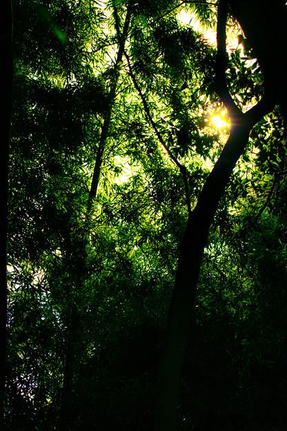 藪の中へ、行ってみたいと思いませんか~?_1