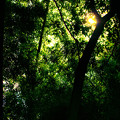 Photos: 藪の中へ、行ってみたいと思いませんか~?_1